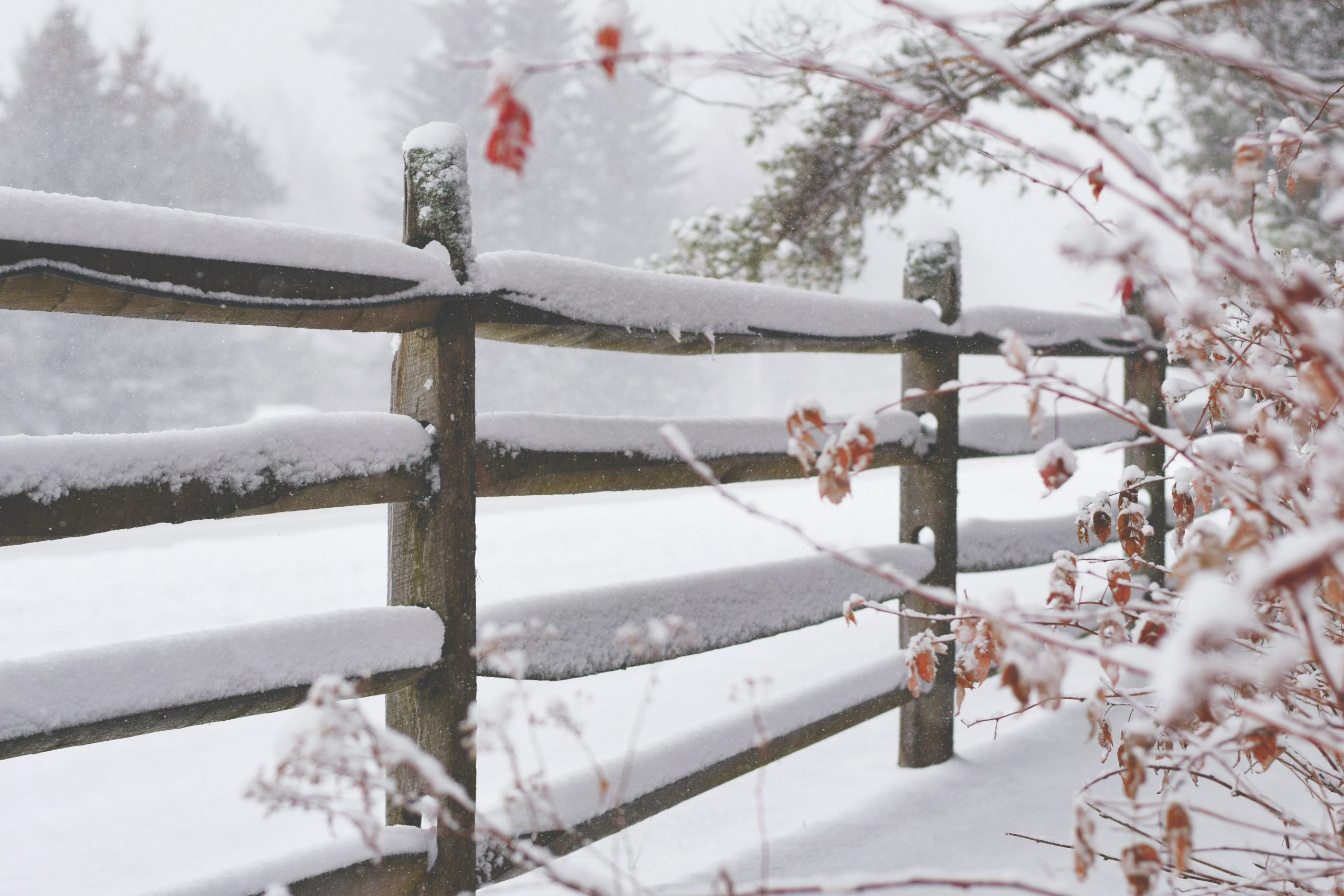 Ease into Winter with Japanese yoga